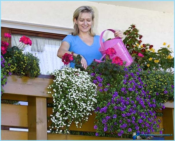 Можно ли сажать цветы 955
