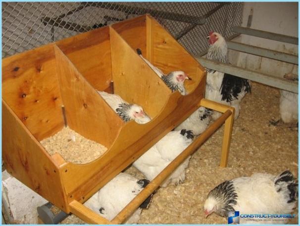 Come costruire un capannone con le loro mani per i polli for Come costruire un capannone moderno