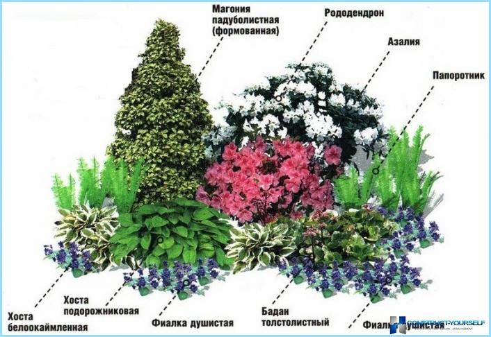 Какие цветы посадить с северо западной стороны
