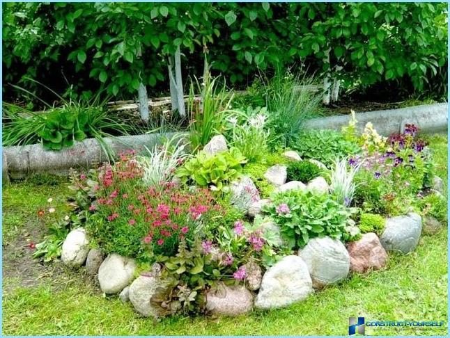 Фото цветов для альпийская горка на даче
