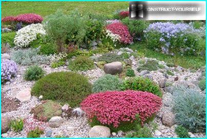Rockery in the summer riot of colors