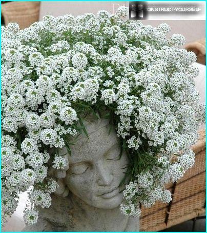 Bijeli cvjetovi za vrt: vrsta drveća i cvijeća s bijelim cvijećem