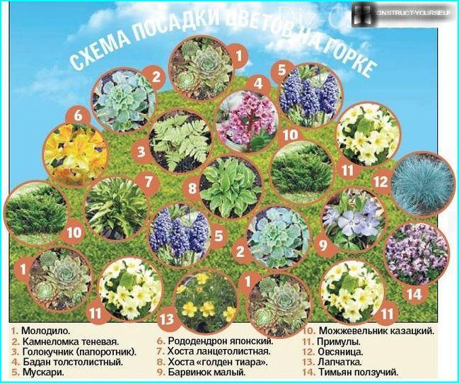 Растения для альпийская горка