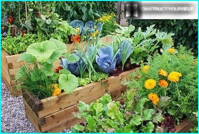 Vegetable beds in wooden containers