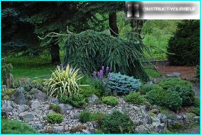 Mi az a talajtakaró üzem?