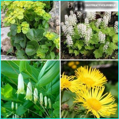 The best varieties for the densely shaded areas