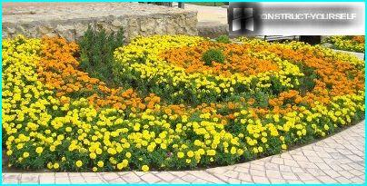 A flower bed of marigolds
