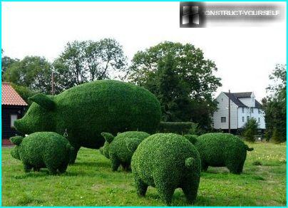 Topiary Frame oink-oink