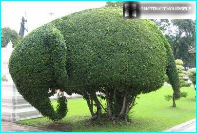 Topiary elephant