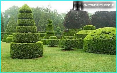 Garden topiary sculptures