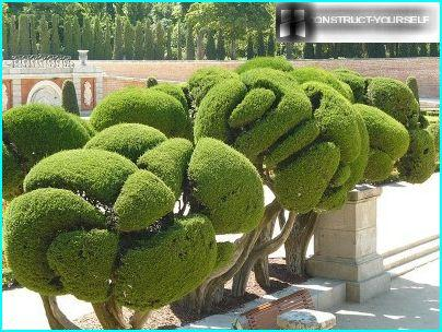 Unusual Topiary
