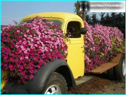 A flower bed in the old cars