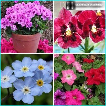 In the spring, annuals