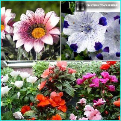 Annuals, blossoming summer