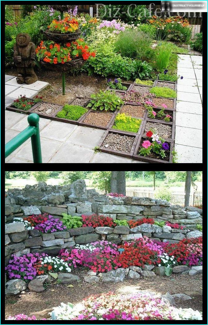 Petunia dārzā akmeņiem