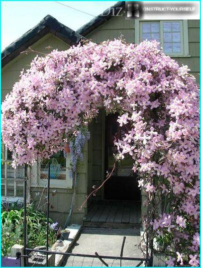 Clematis porch