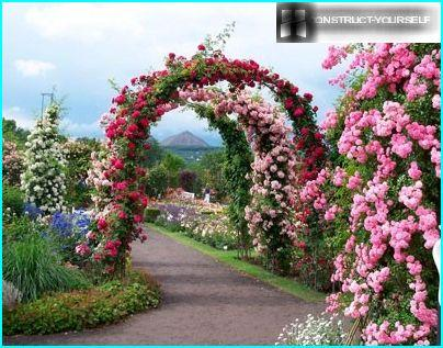 Elegant look arches of climbing roses