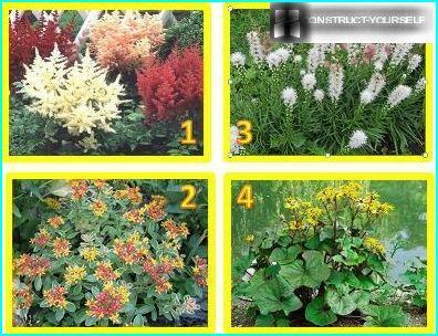 Flowers Siberia