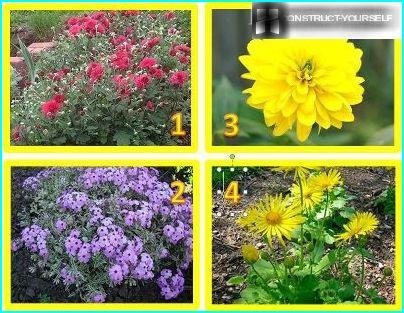 Flowers Urals