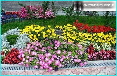 The colorful flower beds of annuals