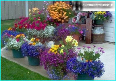 Flower gardens in containers