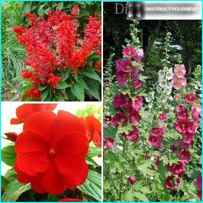 Plants for creating flowerbed in red tones