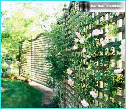 Fence - trellis fence