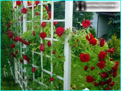 This trellis is easy to do from the small timber