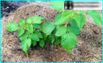 Раціональне застосування скошеної траві