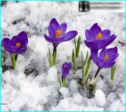 пухкий сніг