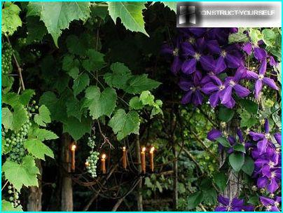 Flowering plants for vertical gardening