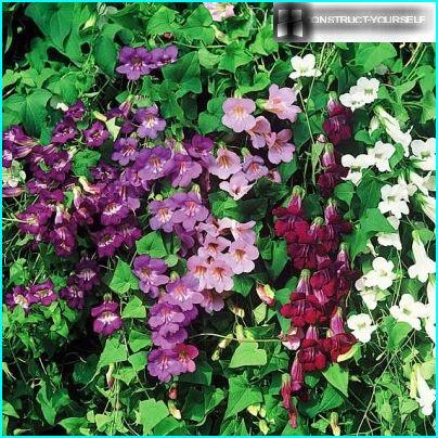 Features Selection of plants for vertical gardening