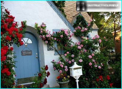 Плетуться троянди на стіні