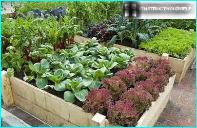 Option processing vegetable beds