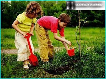 Plante bærbusker når