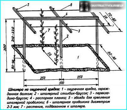 Схема шпалери для огірків