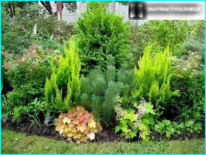 Picturesque vegetable composition with conifers