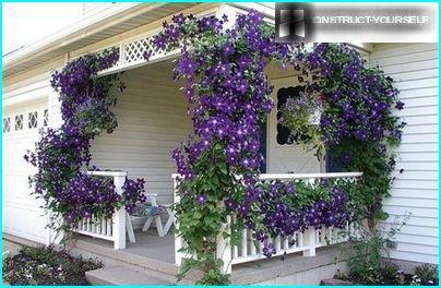 Fancy veranda, dekorēts ar ziedēšanas Clematis vīnogulājiem