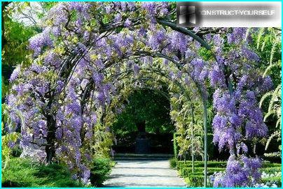 Beautiful garden arch along the alley