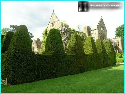 The molded hedges