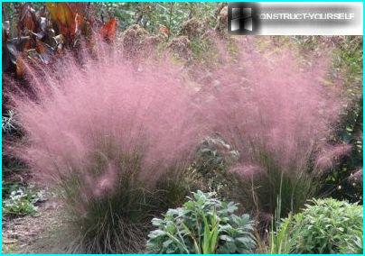 The attractiveness of annual grasses