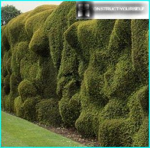 Unusual surface hedges
