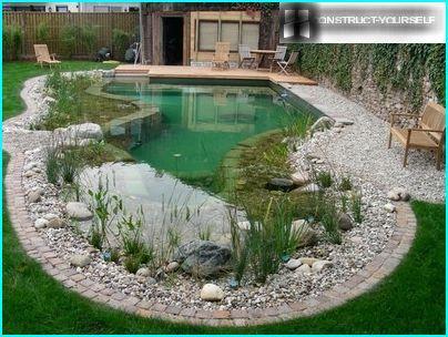 ปลูกพืชในบ่อ