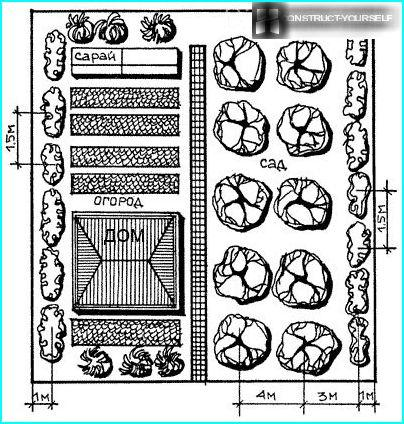Plan garden and vegetable garden