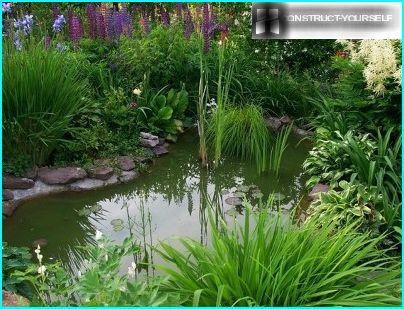 Pond in the landscape style