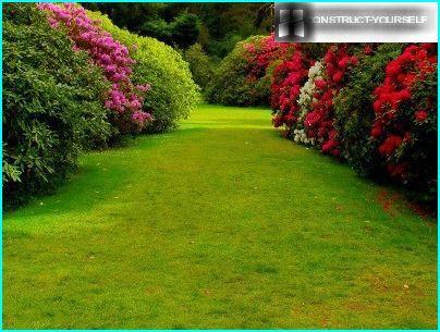 Design lawn