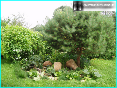 The successful combination of conifers and annuals