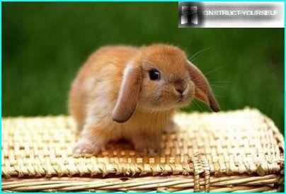 Decorative rabbit