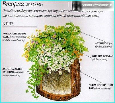 Anpflanzung