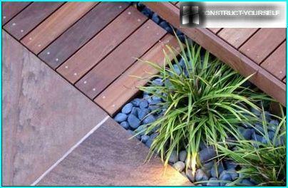 Dekorativnolistvennye augi - izgreznot terašu